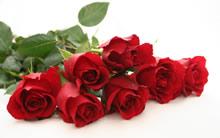 玫瑰花高清晰壁纸