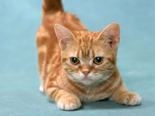 可爱的猫咪壁纸