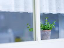 室内绿色植物