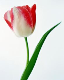 竖式鲜花高清晰壁纸