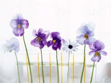 室中鲜花摄影
