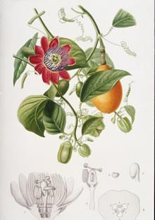 手绘花鸟植物