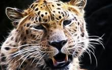 动物CG设计