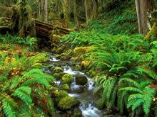 原始森林美景